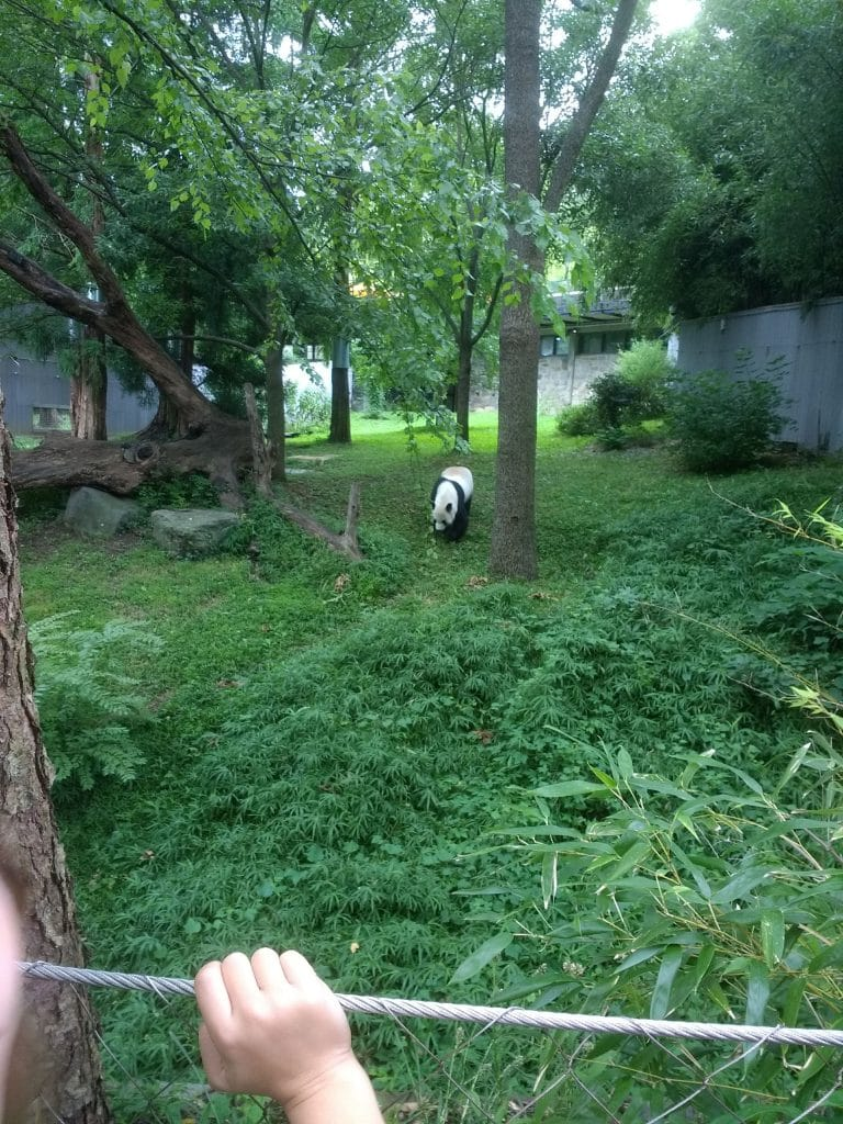 Experiencing the Smithsonian Zoo