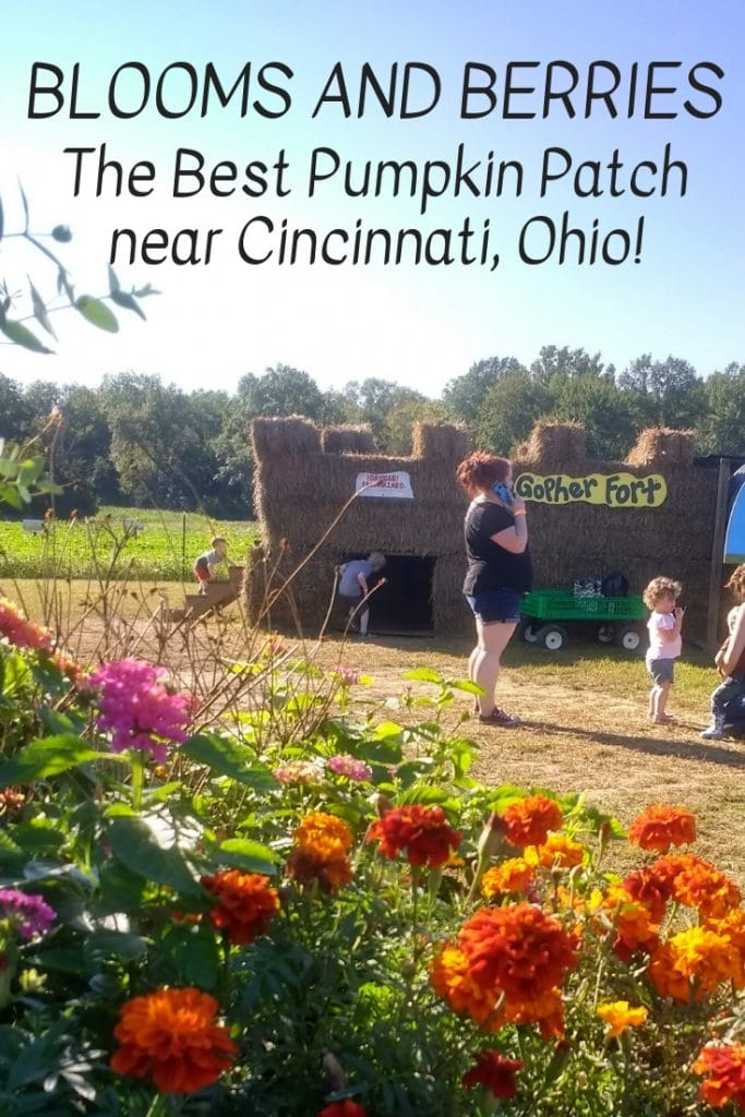 Learn why Blooms and Berries is the best pumpkin patch in the Greater Cincinnati area!